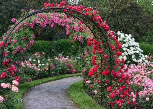 Garden Arbor with path running through it